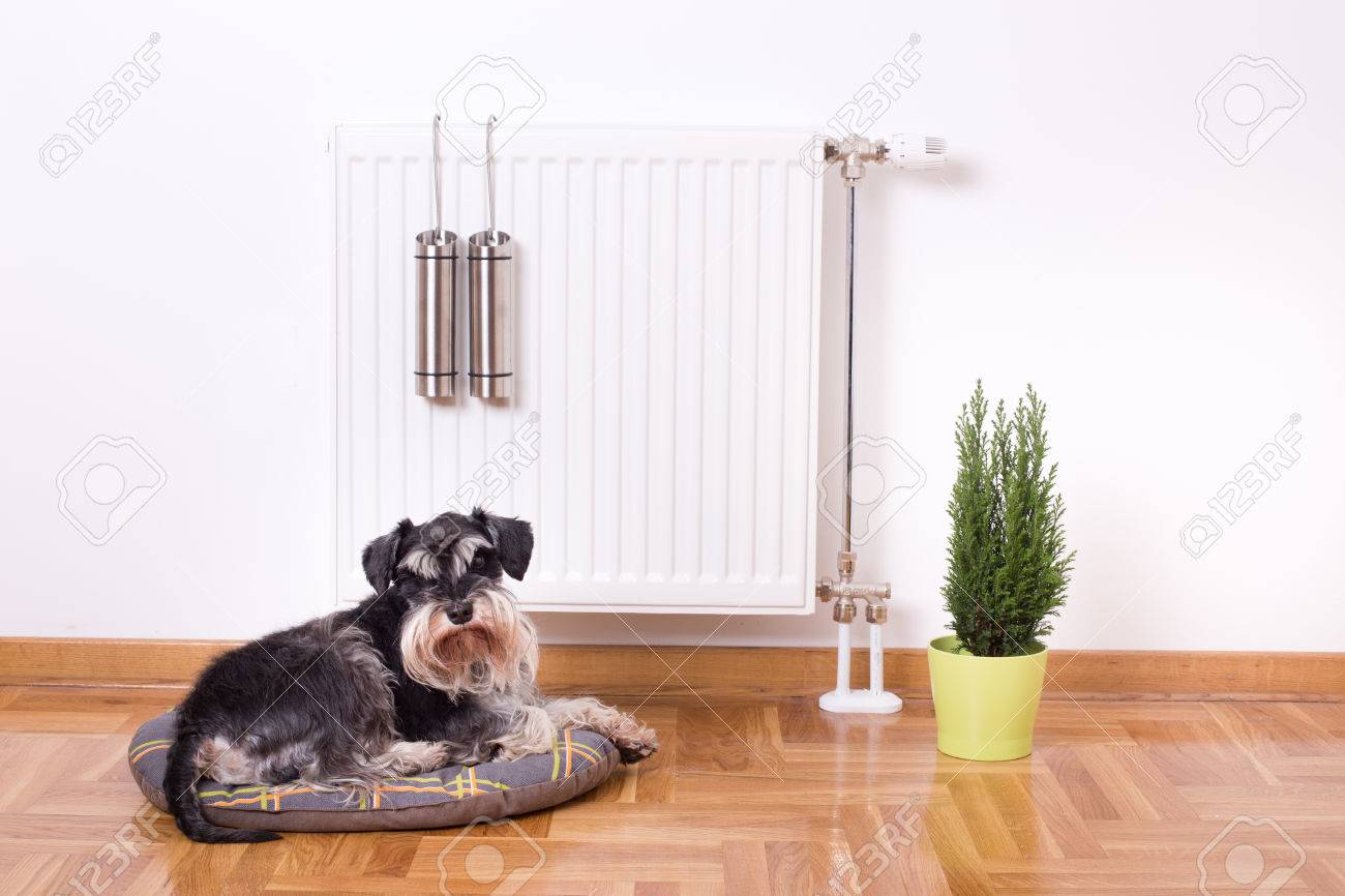 Good indoor climate concept. Dog lying on the pillow in front of radiator with water containers for steam - 50443123