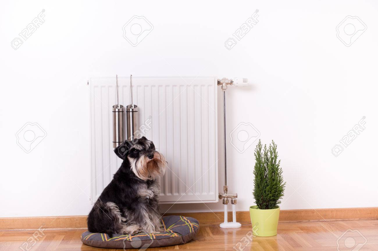 Good indoor climate concept. Dog sitting on the pillow in front of radiator with water containers for steam - 50443124