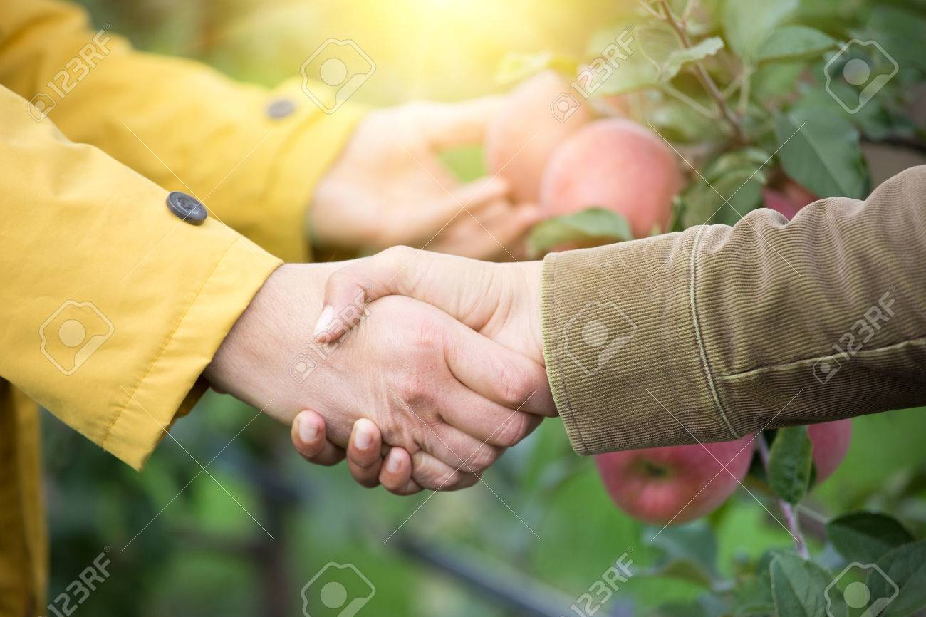 Close up of two men shaking hands in orchard. Agribusiness concept - 65101376