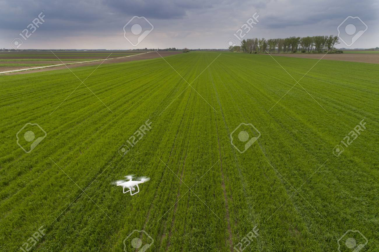 Drone flying over green wheat field in spring. Technology innovation in agricultural industry - 76545803