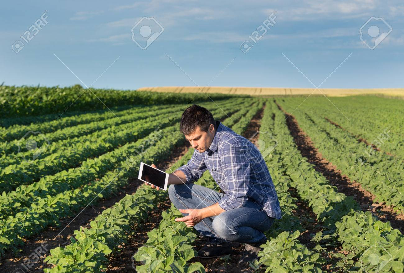 Young handsome agriculture engineer squatting in soybean field with tablet in hands in early summer - 80322351