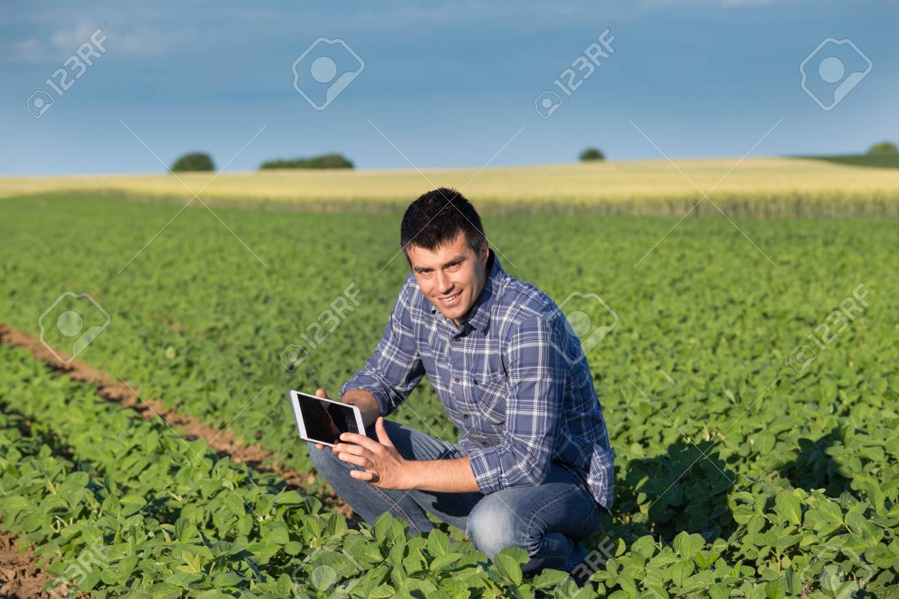 Young handsome agriculture engineer squatting in soybean field with tablet in hands in early summer - 80327749