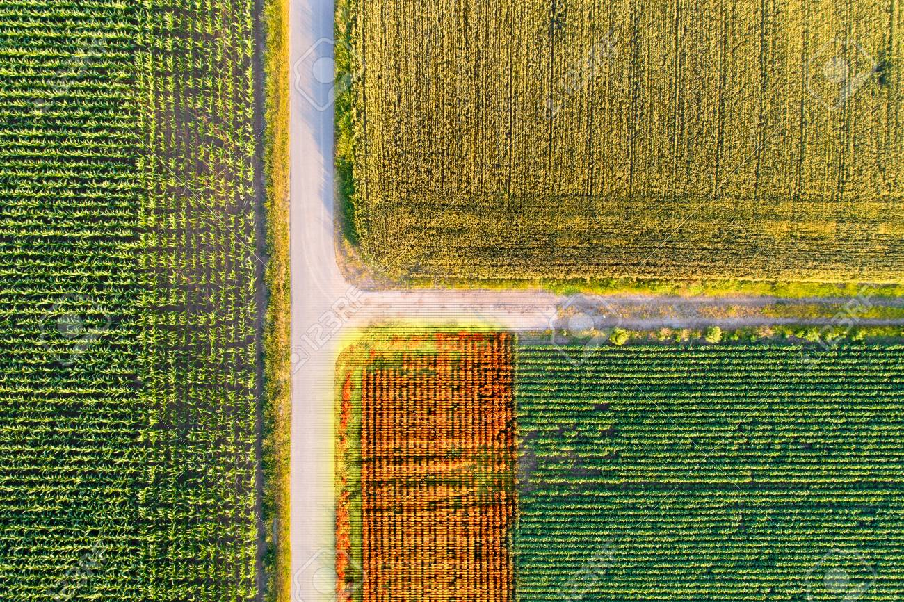 Abstract image of agricultural fields shoot from drone with markers on crops - 89535622