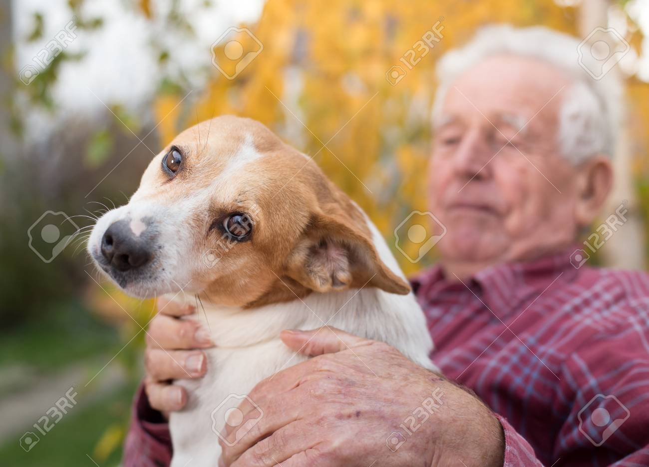 Cute dog cuddling on old man's lap in park in autumn. Pet love and care concept. Alternative therapy - 89821844