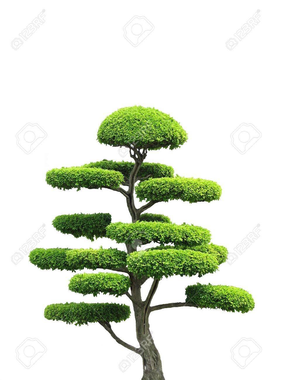Un style asian arbre d'ornement dans l'isolement. Banque d'images - 2322683