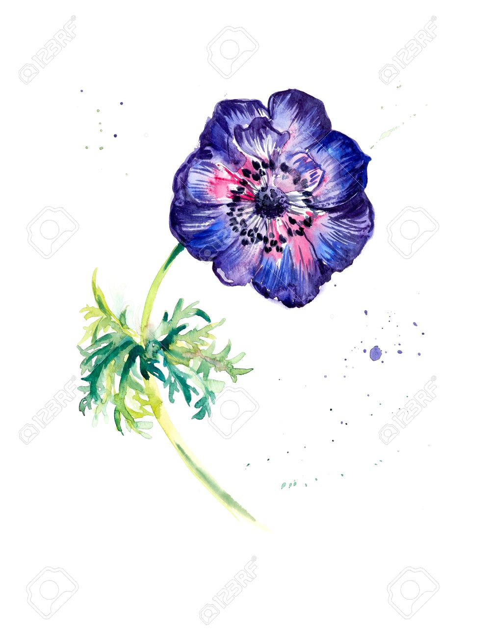Flower anemone watercolor painting greeting cards flower watercolor painting greeting cards flower background watercolor composition flower m4hsunfo