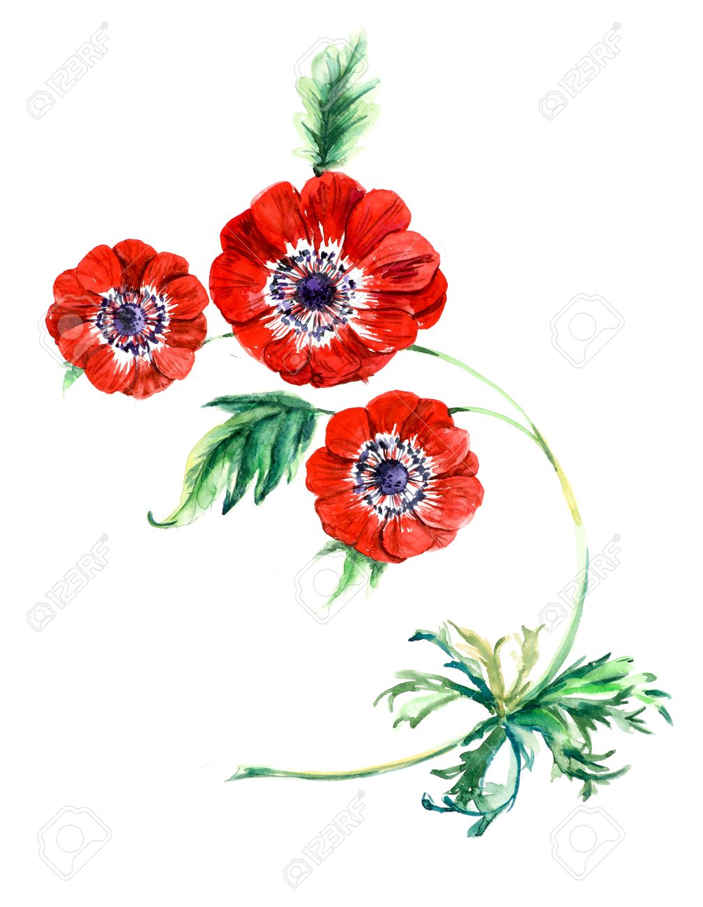 Three red flowers anemone watercolor painting greeting cards three red flowers anemone watercolor painting greeting cards flower background watercolor composition m4hsunfo