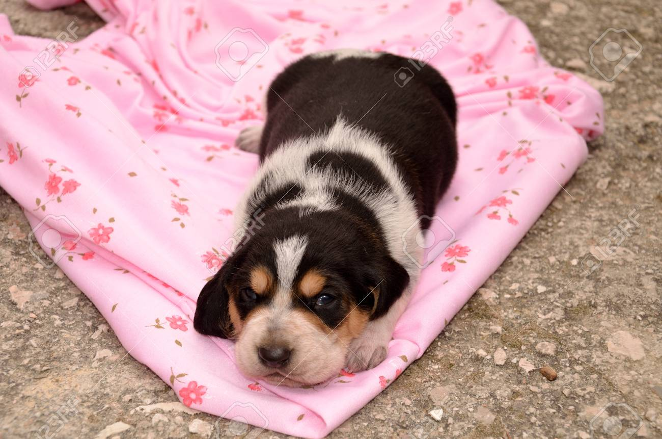 Portrait Of Adorable Puppy Dog Stock Photo Picture And Royalty Free Image Image 12659571