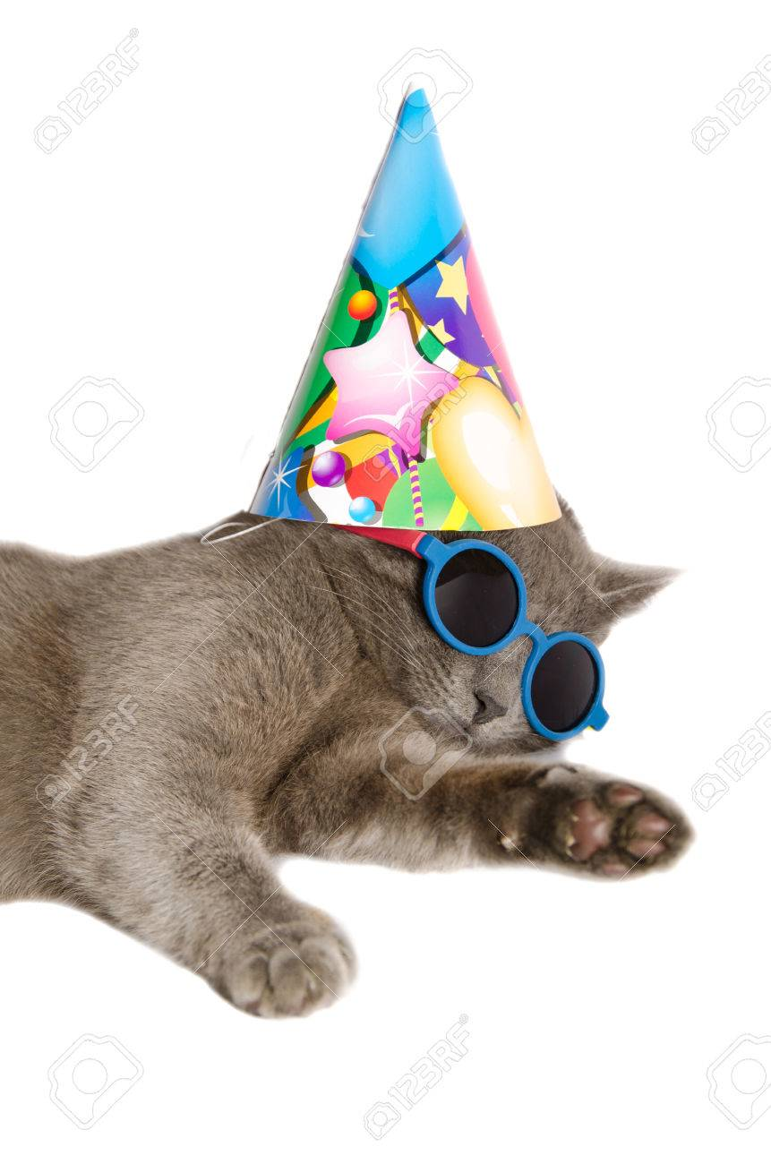 Cat With Birthday Hat And Sunglasses Isolated On White Background Stock Photo