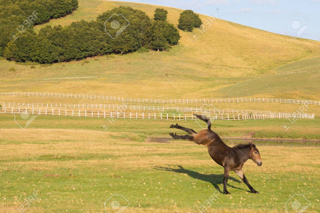 Funny Animal Baby Horse Jumping On Summer Field Stock Photo Picture And Royalty Free Image Image 44483578