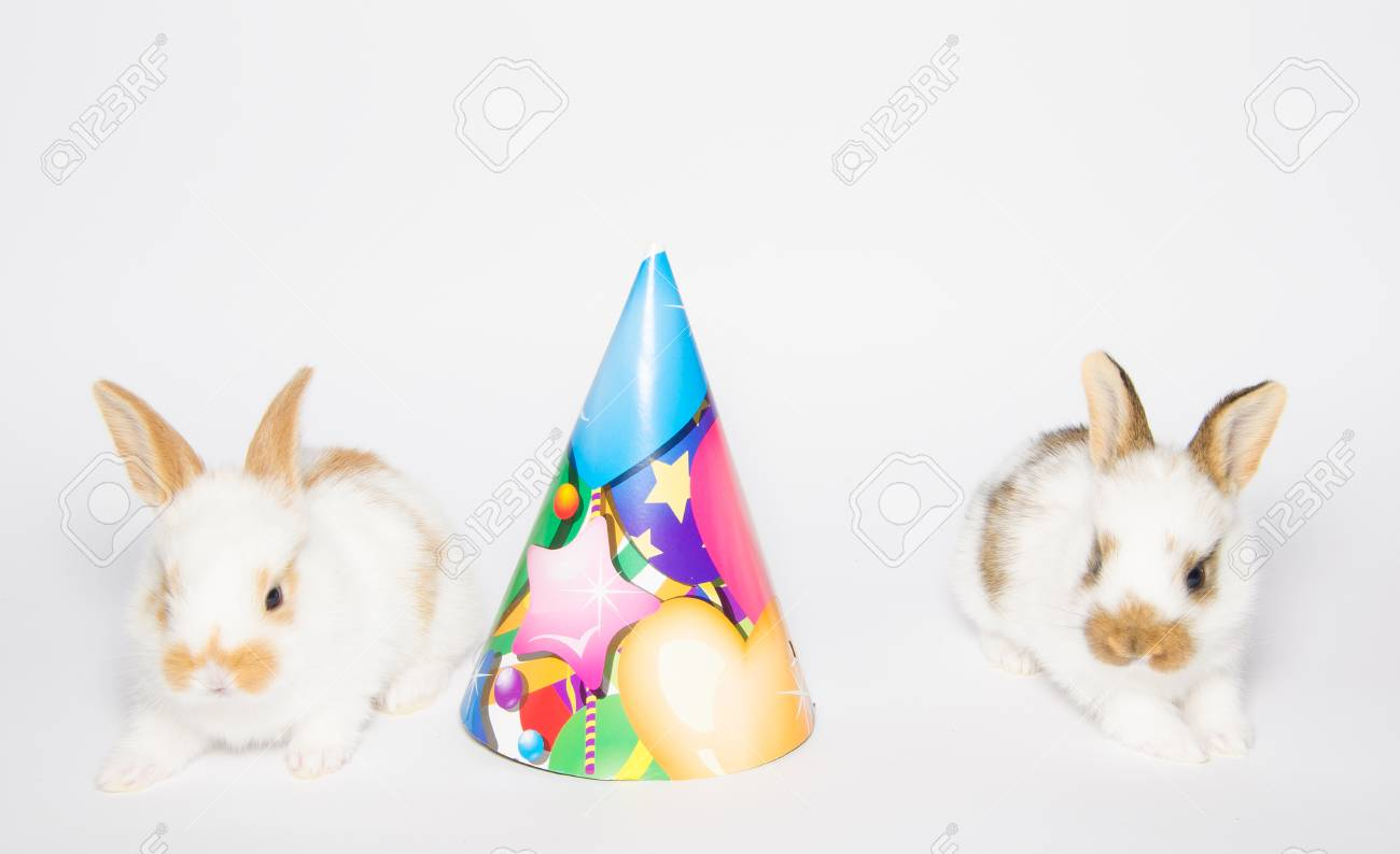 Happy Birthday Card With Rabbits And Party Hat Stock Photo