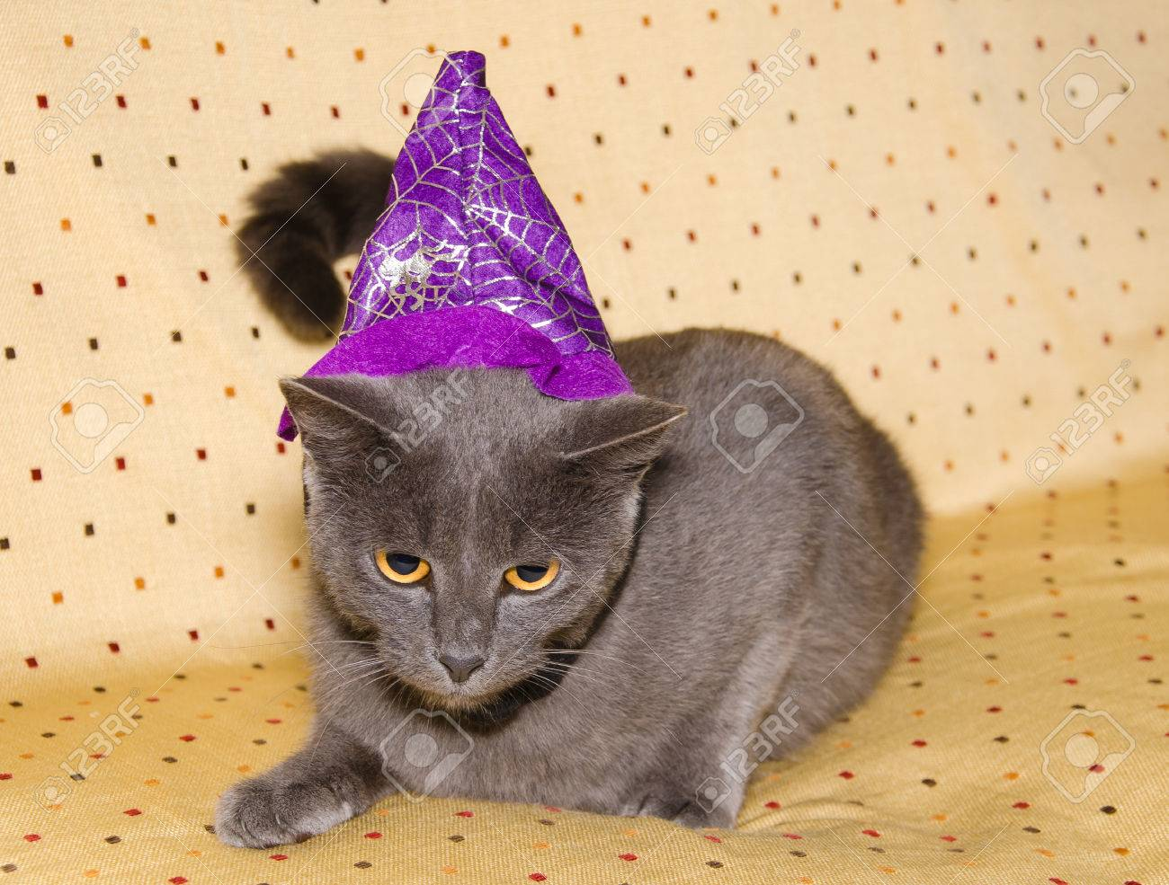 Chartreux cat in costume for a masquerade. Halloween image. Stock Photo - 46724545 & Chartreux Cat In Costume For A Masquerade. Halloween Image. Stock ...