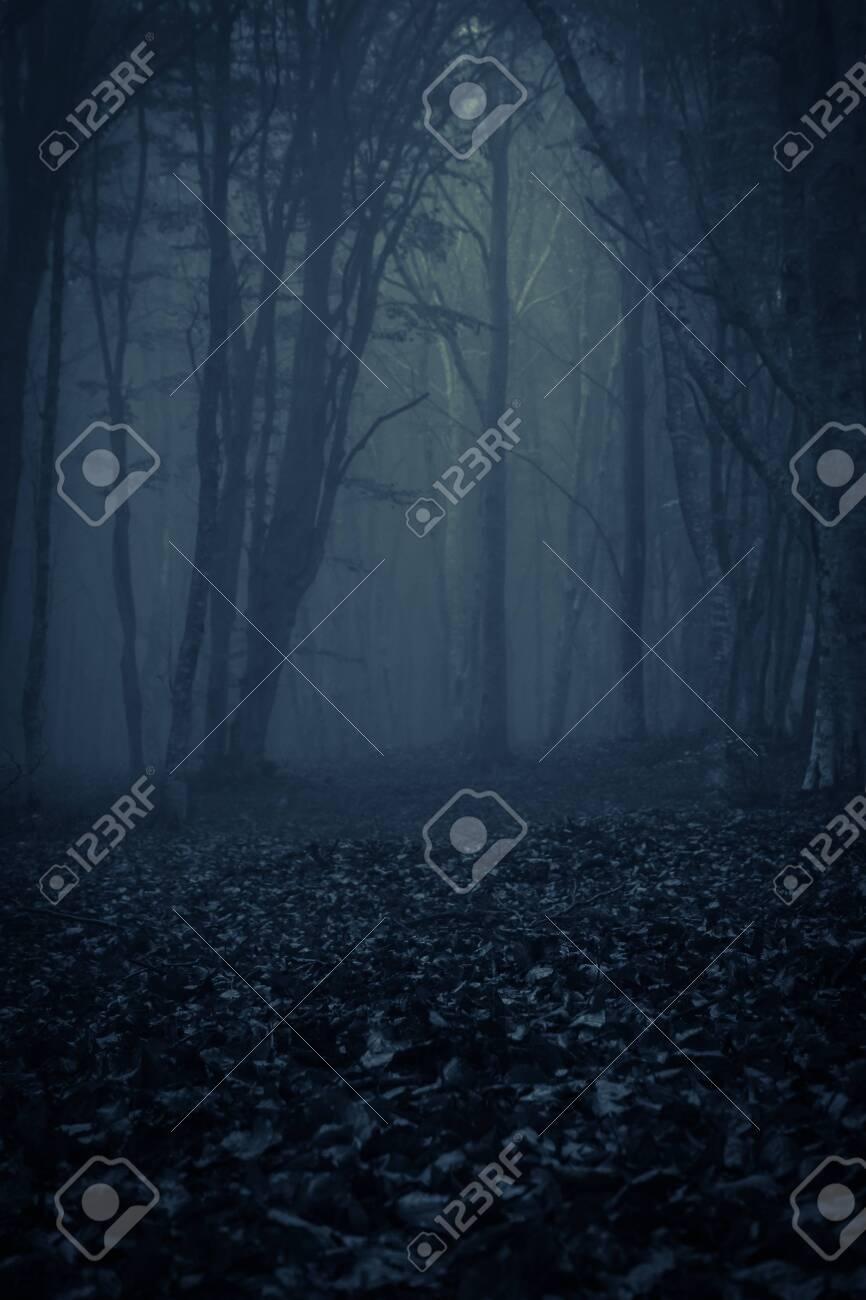 View of dark forest with fog, photo taken in Transylvania, Romania - 133164883