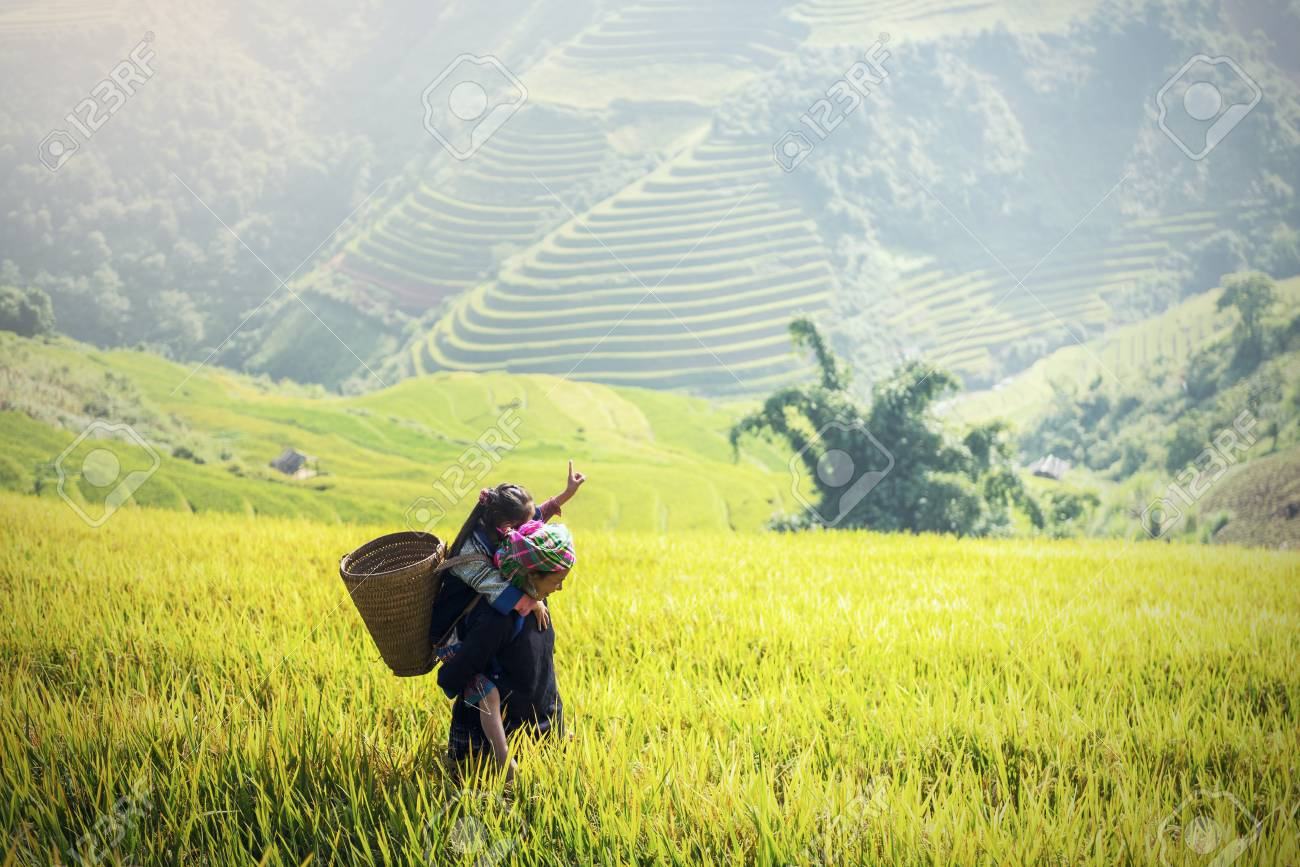 Mother and Daughter Hmong, working at Vietnam Rice fields on terraced in rainy season at Mu cang chai, Vietnam. Rice fields prepare for transplant at Northwest Vietnam - 76085263