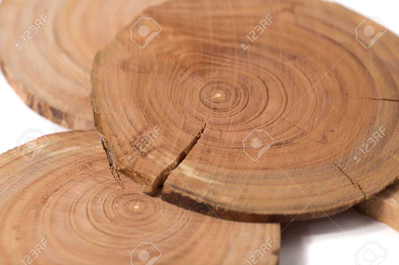 Concept Dendrochronology Tree Trunks Clearly Visible Annual
