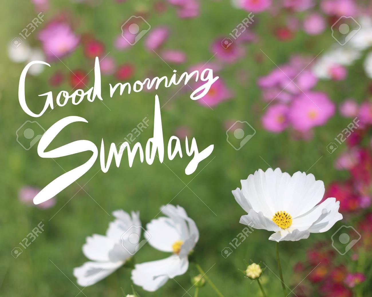 Inspirational Quote Good Morning Sunday On Flowers Background