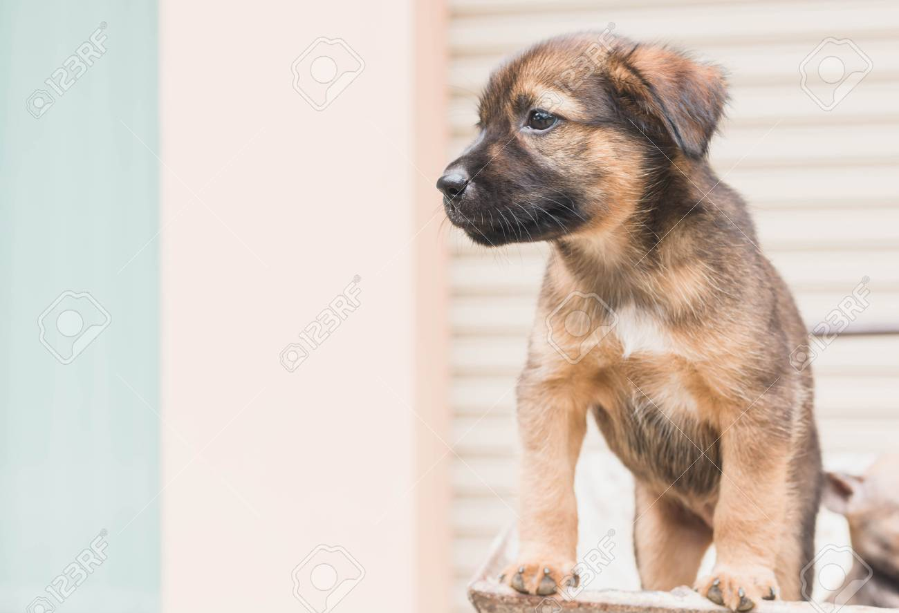 Cute Puppy Dog Looking To Owner Coming Home With Vintage Filter