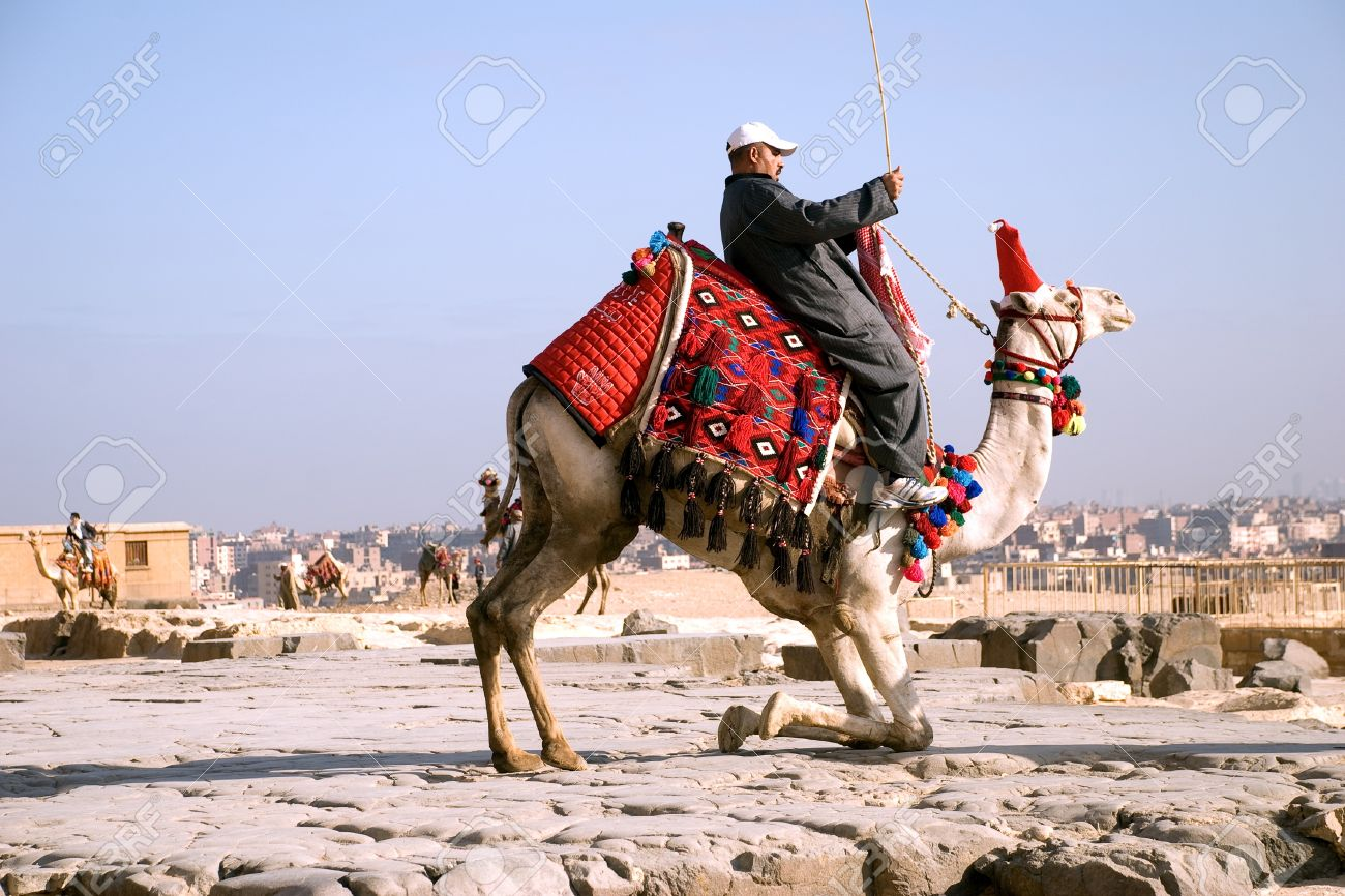 Arab (Bedouin) sitting on the tucking up camel against the background of Cairo. Egypt. Plateau Giza. - 10331682