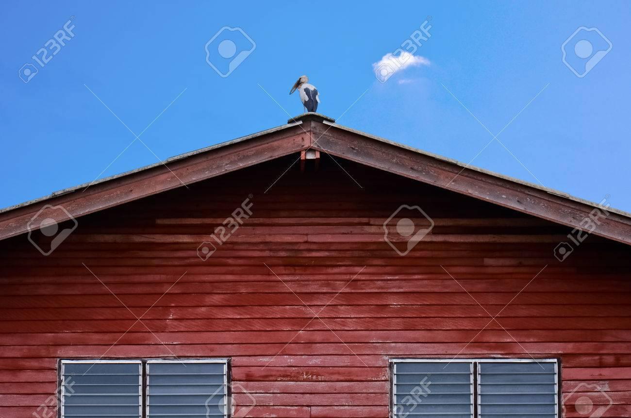 abierto de pico cigea en el tejado foto de archivo