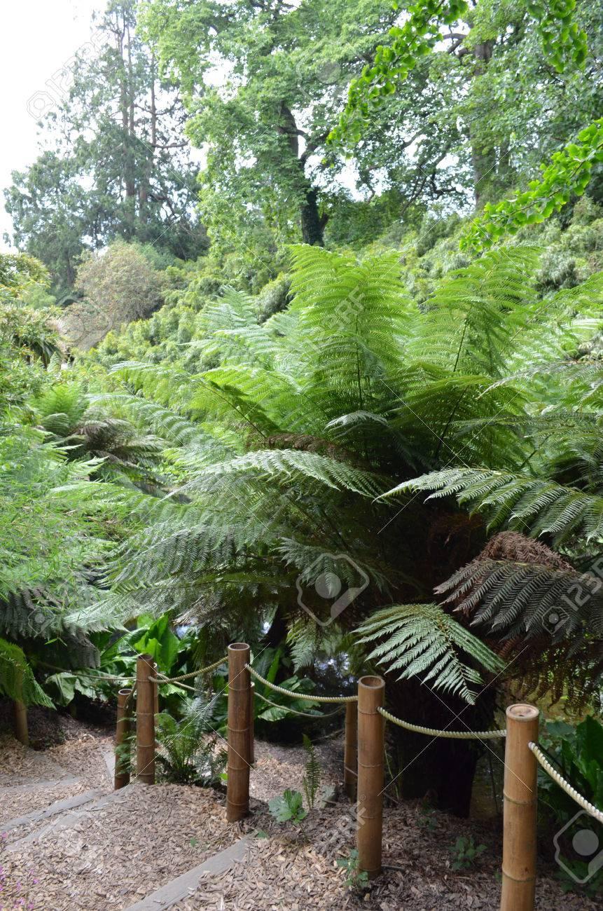 Gravel Garten Schritte Mit Bambus Geländer Lizenzfreie Fotos Bilder