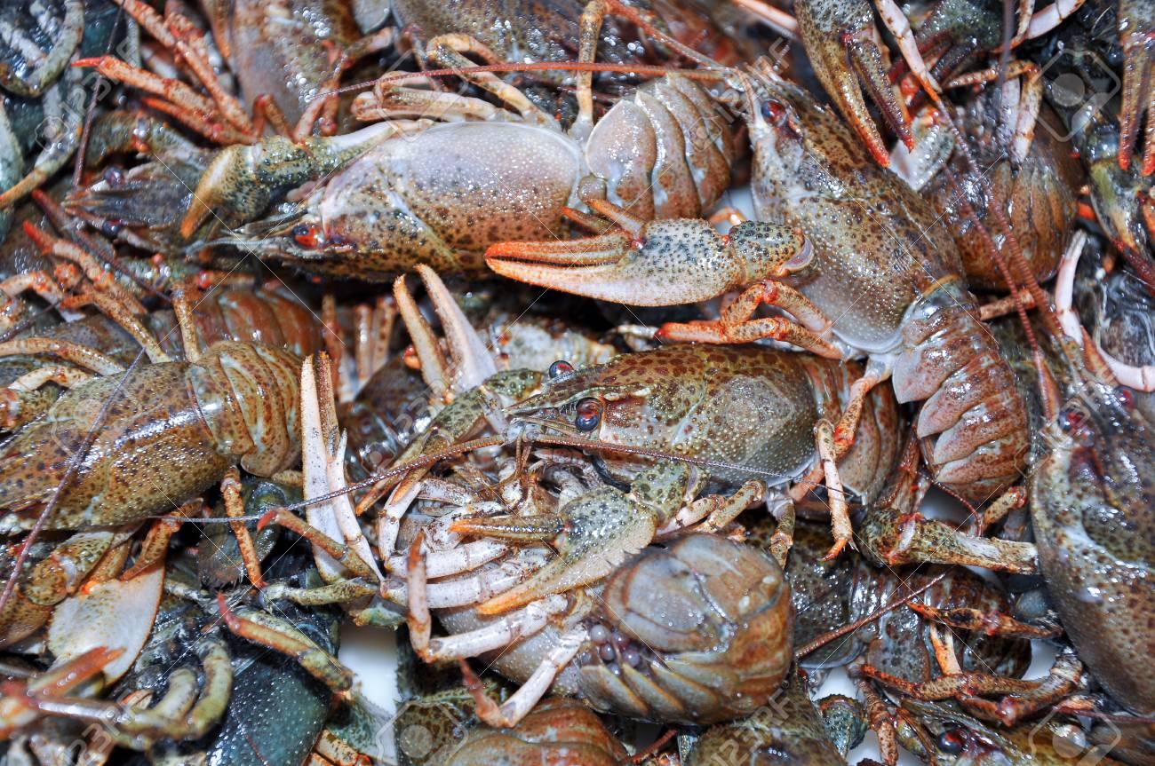 Live crawfish before cooking, boiling  Fresh crawfish background