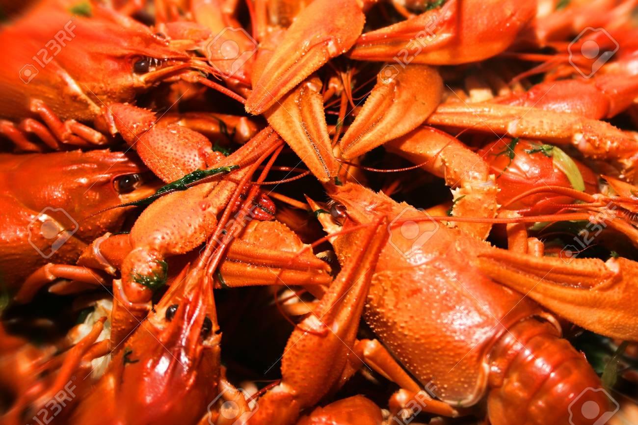 scene river crayfish in water Stock Photo - 10841183