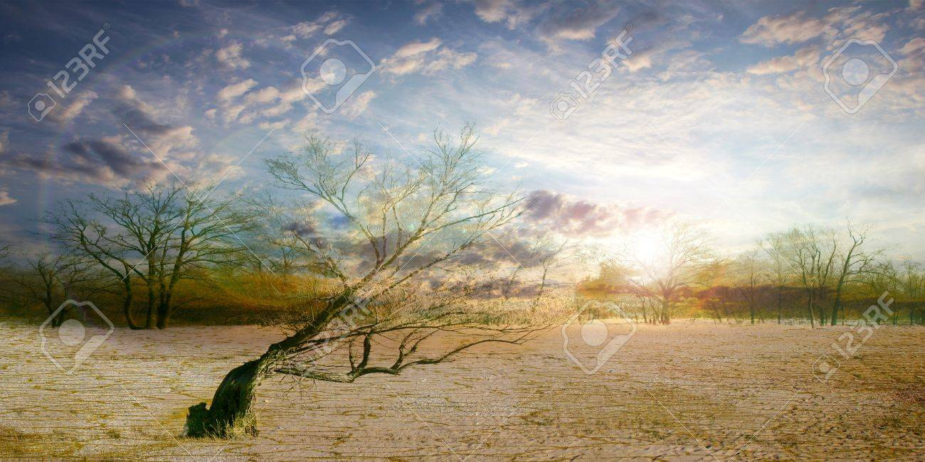 old dry tree in sand desert and celestial landscape Stock Photo - 16574974