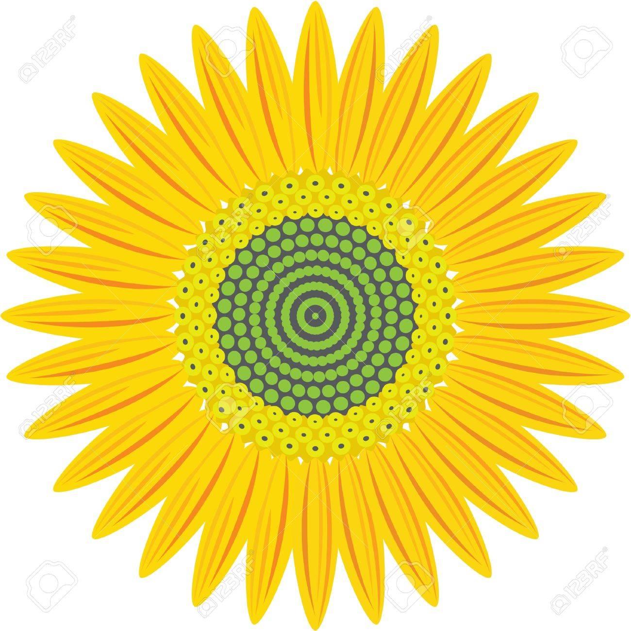 sunflower  isolated on white Stock Vector - 11998221