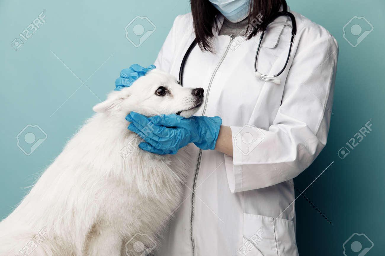 Veterinary in uniform checks the ears dog on the table in vet clinic - 169820278