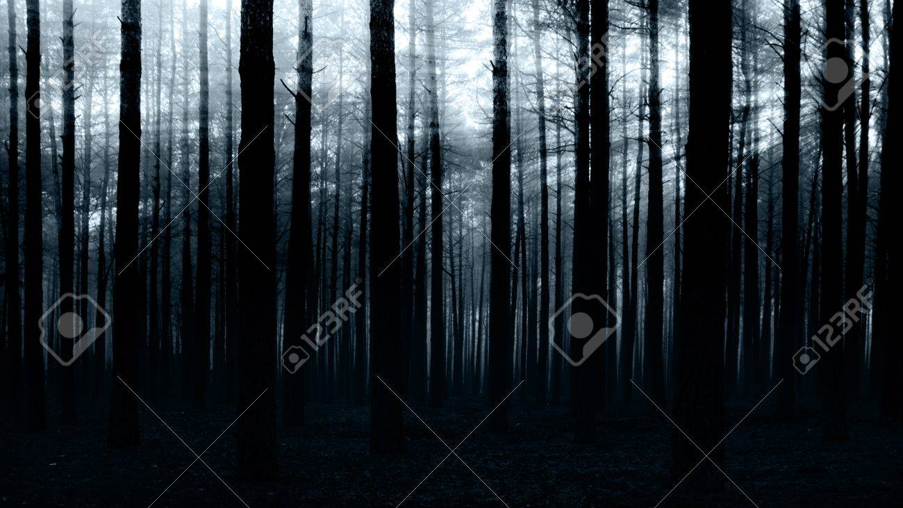 sunset in the dark forest for you design Stock Photo - 8409100