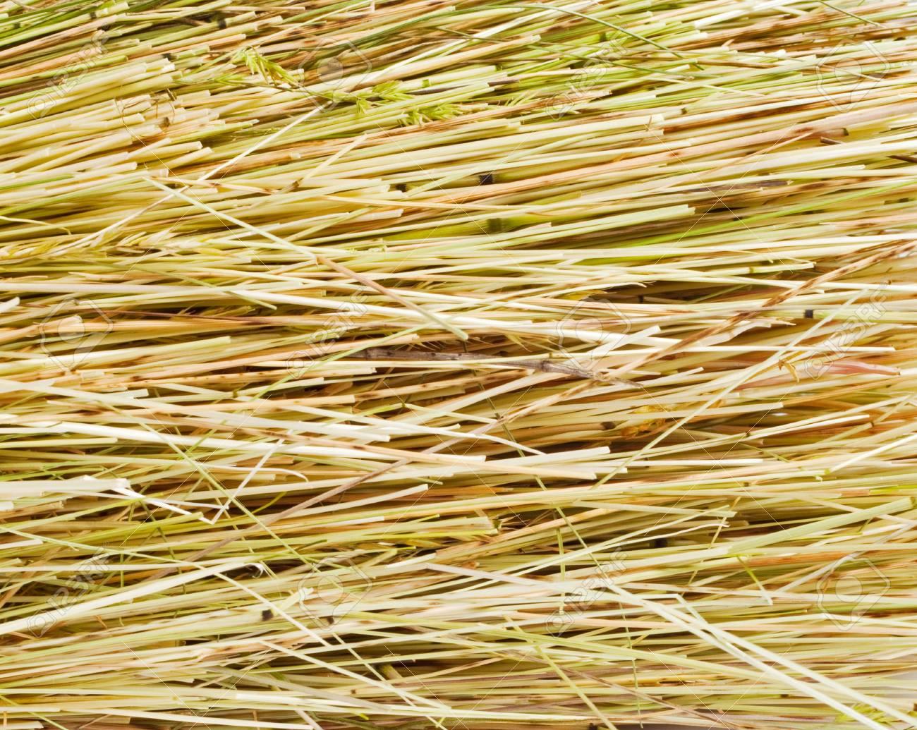 Grunge texture of dry grass Stock Photo - 9740477