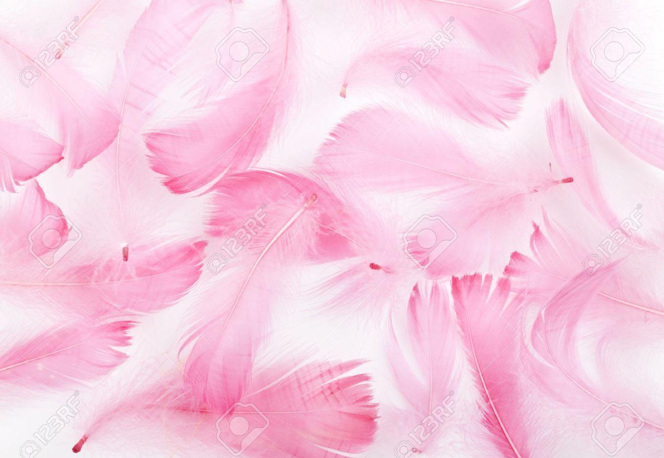 Roze veren