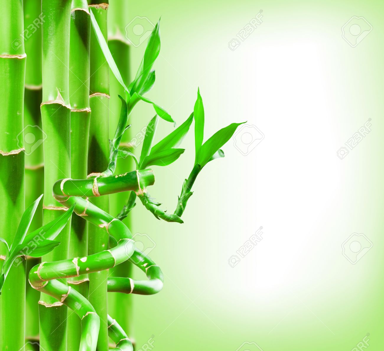beautiful green bamboo border for you design stock photo 15411222