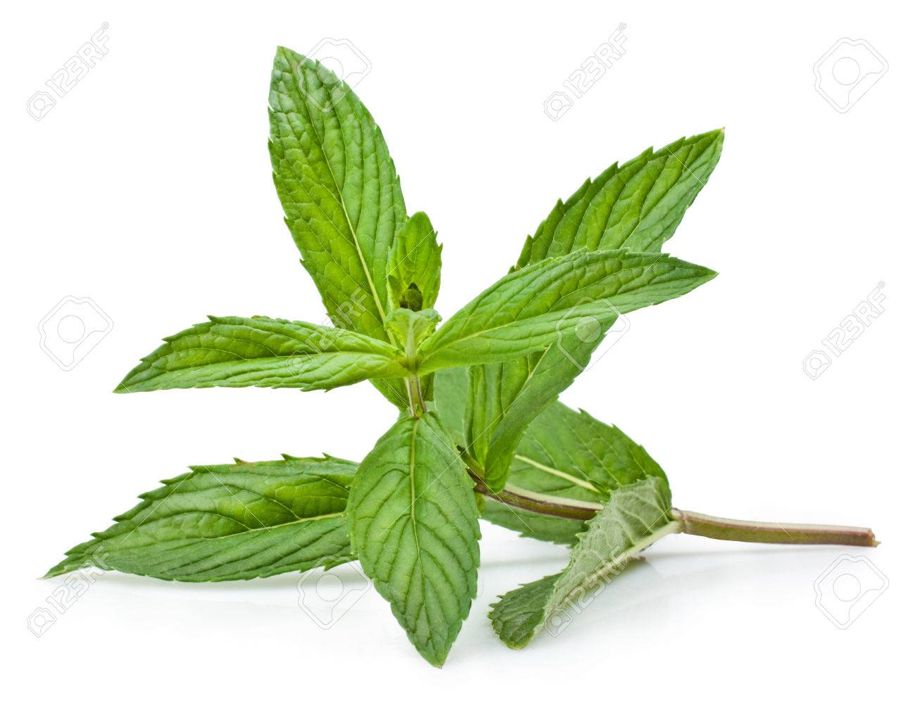 Fresh mint isolated on a white background - 25112877