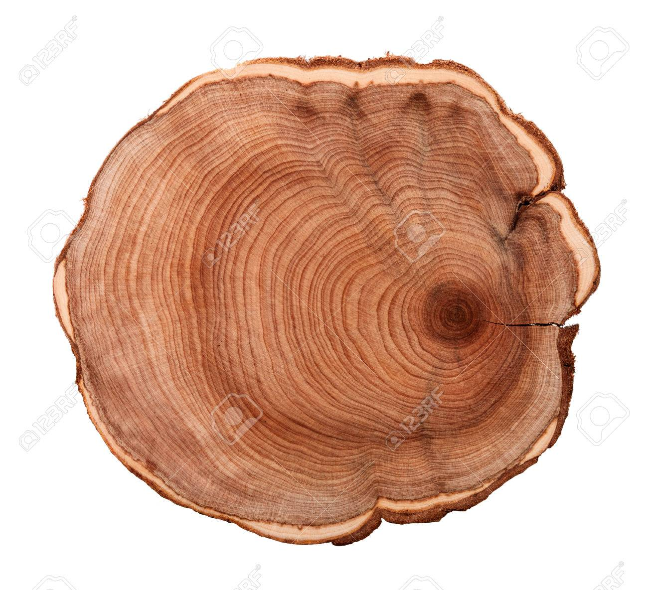 Top view of a tree stump isolated on white background - 27332157