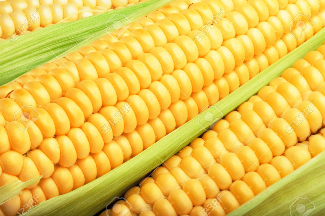 corn cob between green leaves for you design - 30110767