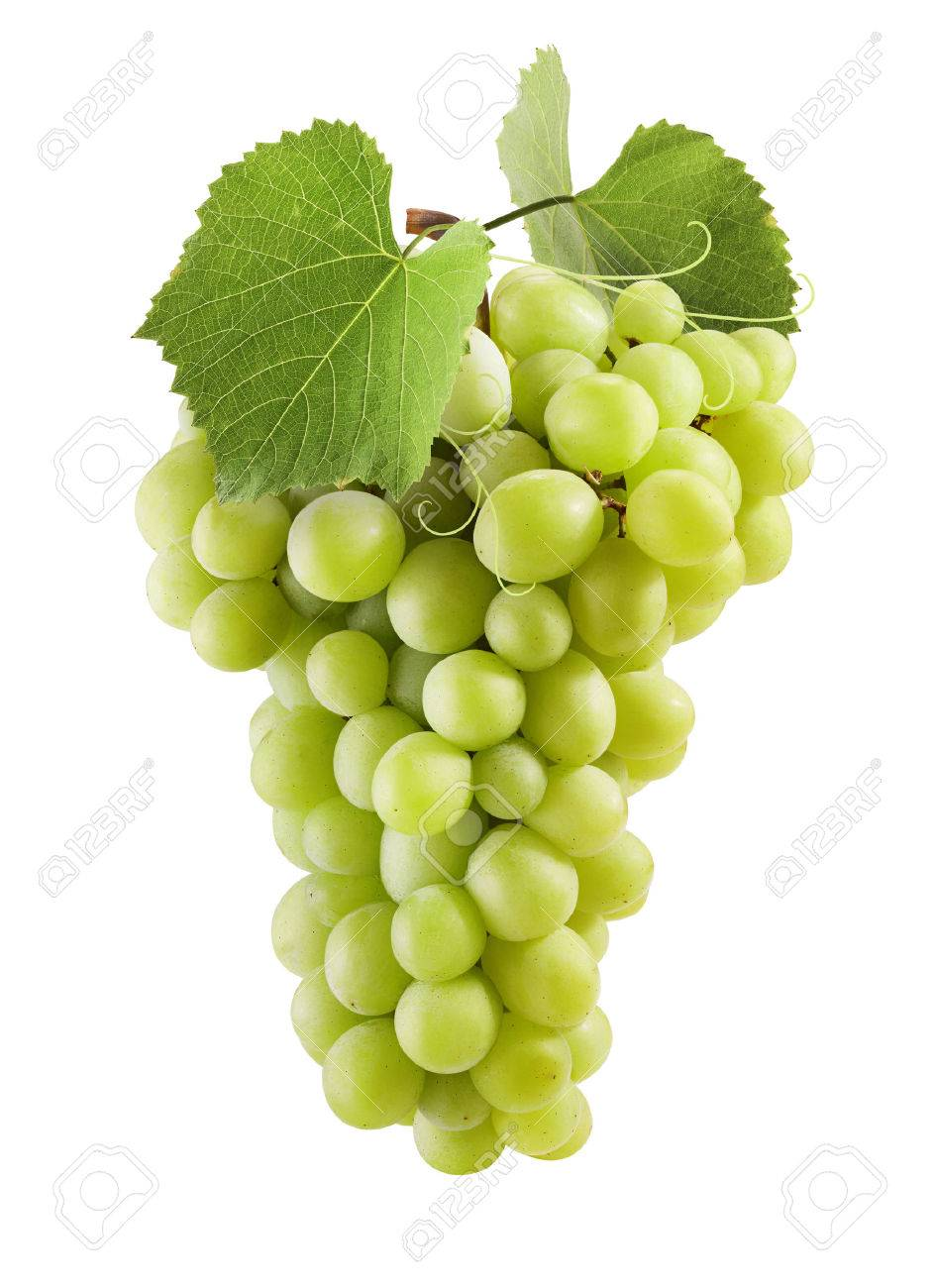 fresh green grapes with leaves isolated on white stock photo