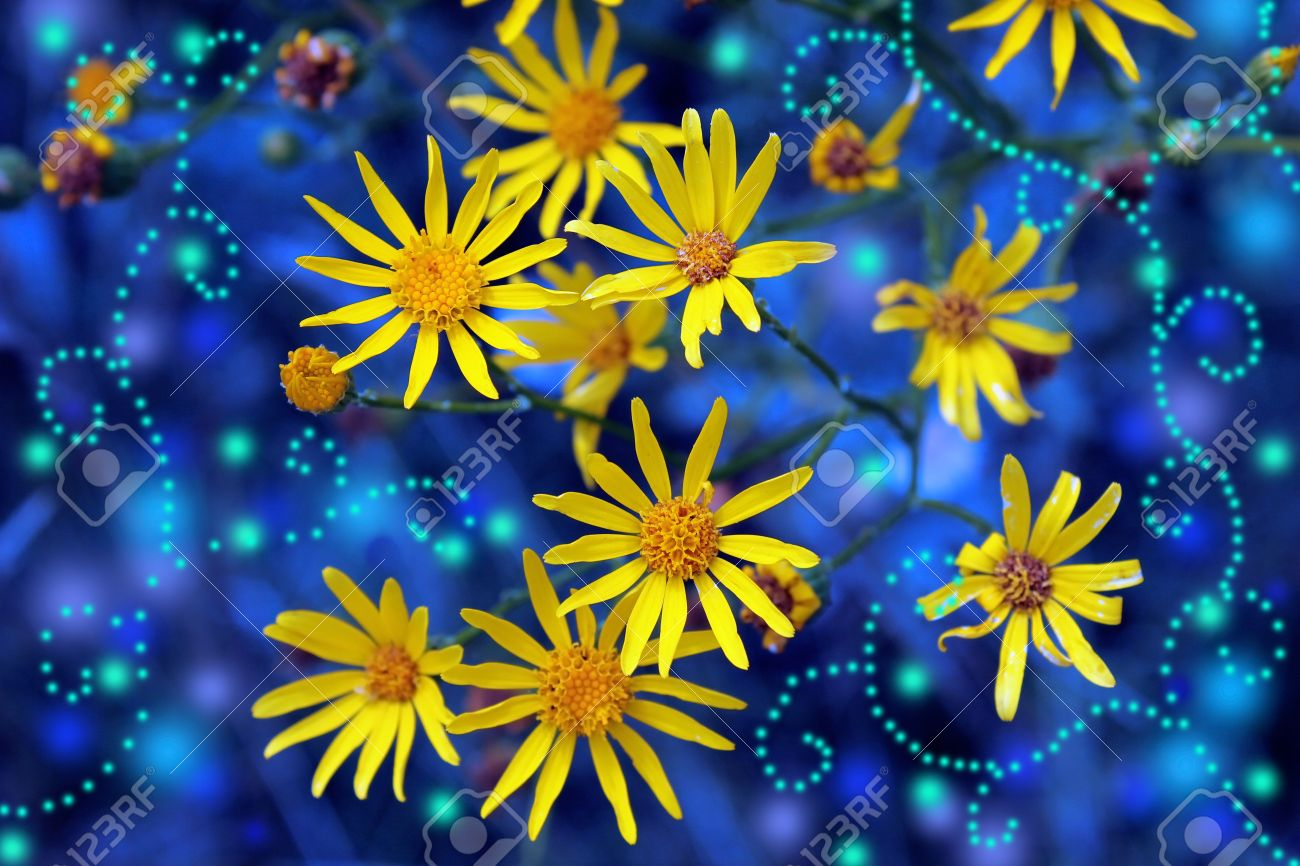 Magic yellow flowers on a blue background stock photo picture and magic yellow flowers on a blue background stock photo 16554668 mightylinksfo