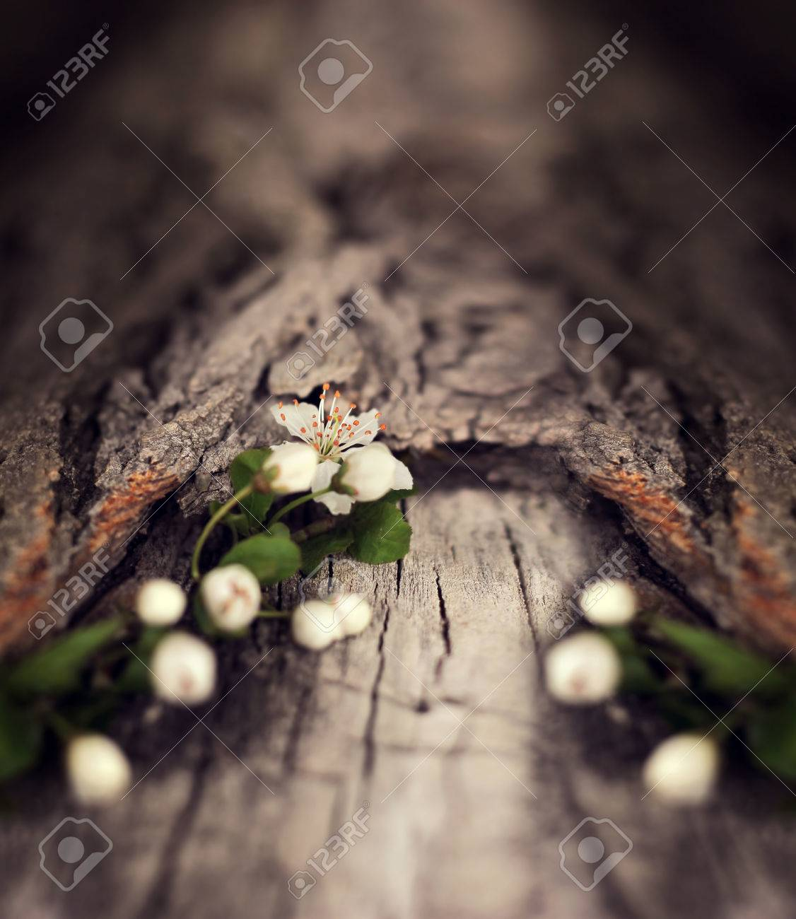 Dramatic Spring Flowers On A Rustic Wooden Background Blurred Space For Text Stock Photo