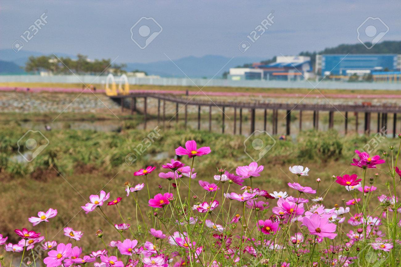 Flower Festival in Yellow Ciy Jangseong, Jeonnam, South Korea, Asia. - 162854809