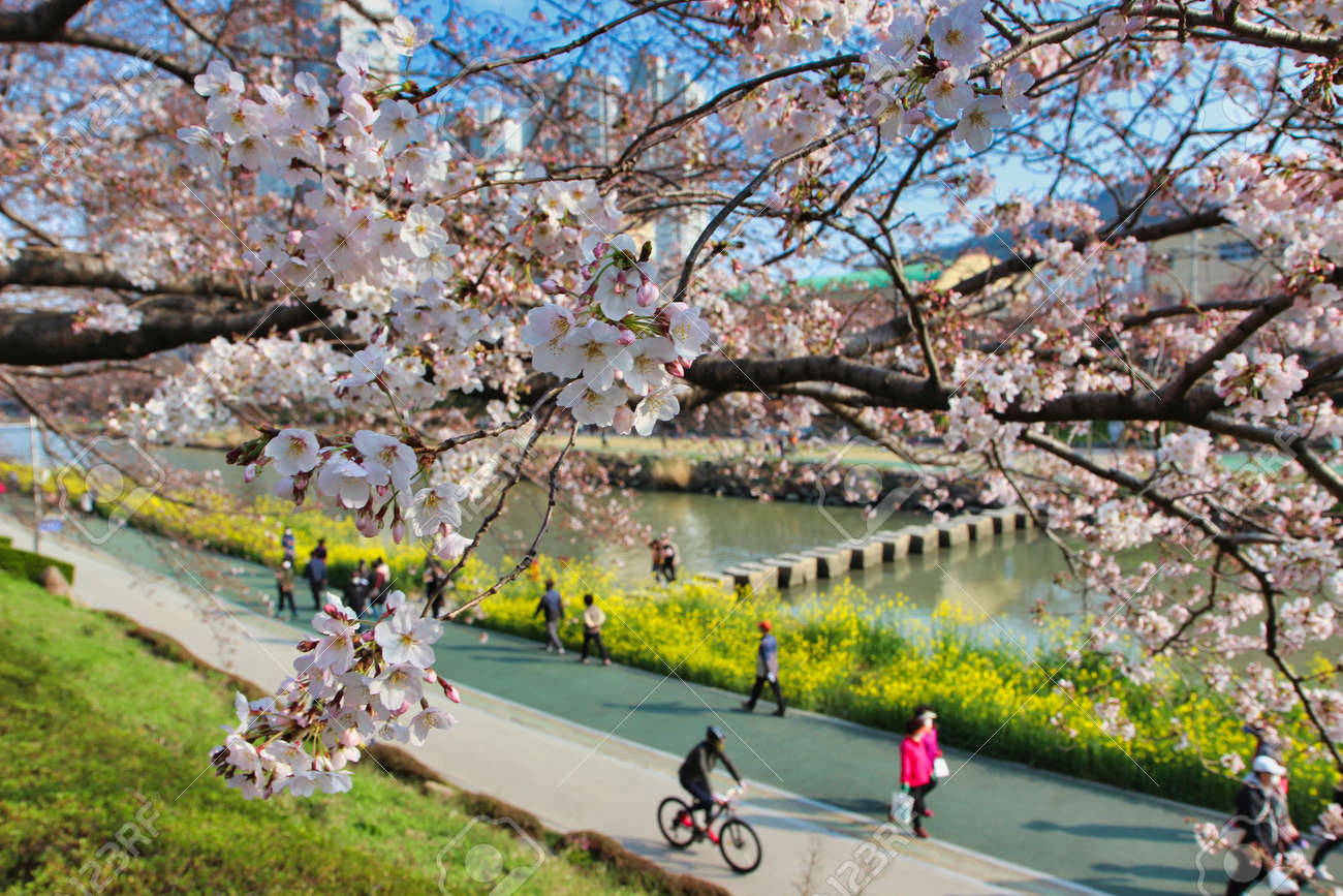 Spring of Oncheoncheon Citizens Park, Busan, South Korea, Asia - 162844829