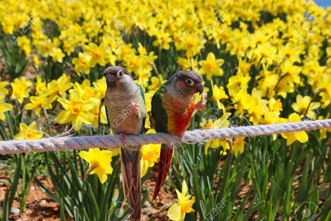 Narcissus daffoldil Blooming in haemaji park, Oryukdo, Busan, South Korea, Asia - 166995425