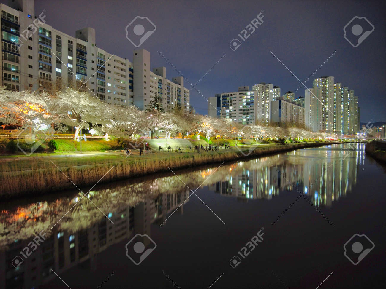 Night view of spring oncheoncheon stream, Busan, South Korea, Asia. - 167342948