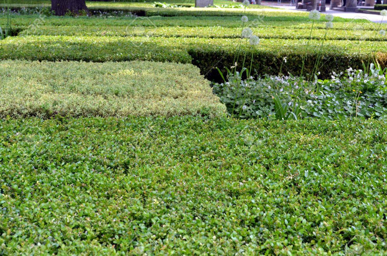 English Boxwoods Garden Design Id Html on