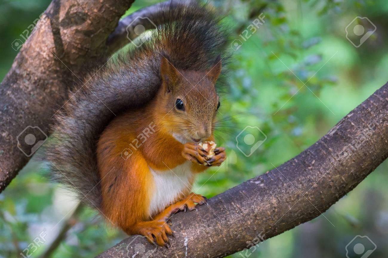 Die Fotografie Zeigt Eine Eichhörnchen Lizenzfreie Fotos, Bilder Und ...