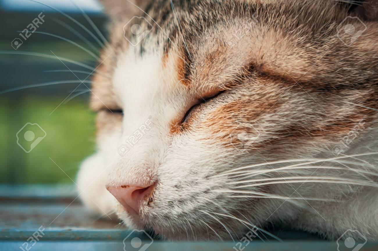 Portrait shot of homeless stray cat living in the animal shelter. Shelter for animals concept - 135988449