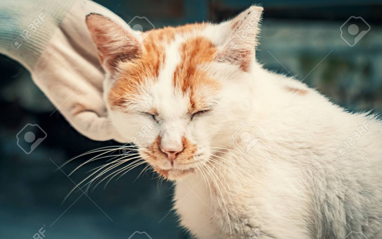 Volunteer's hand petting caged stray cat in pet shelter. People, Animals, Volunteering And Helping Concept. - 135988577