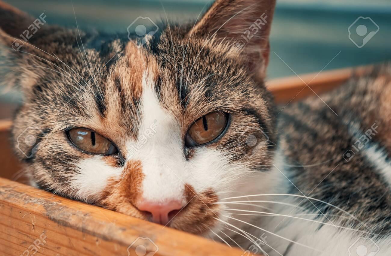Portrait shot of homeless stray cat living in the animal shelter. - 136608012