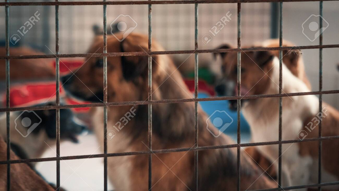 Blurred image of unwanted and homeless dogs in animal shelter. - 136608016
