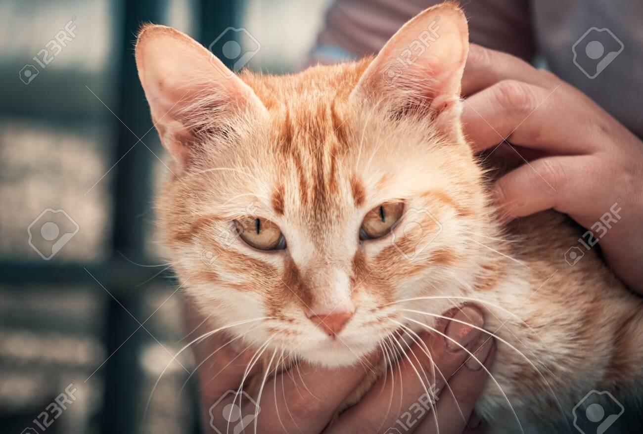 Female volunteer holds on hands cat in shelter - 136608107